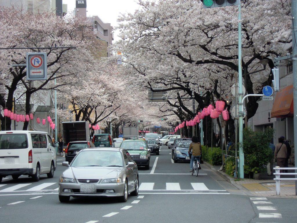 中野通り(新井)