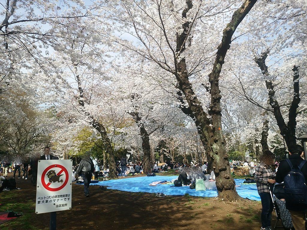 飛鳥山公園の桜3