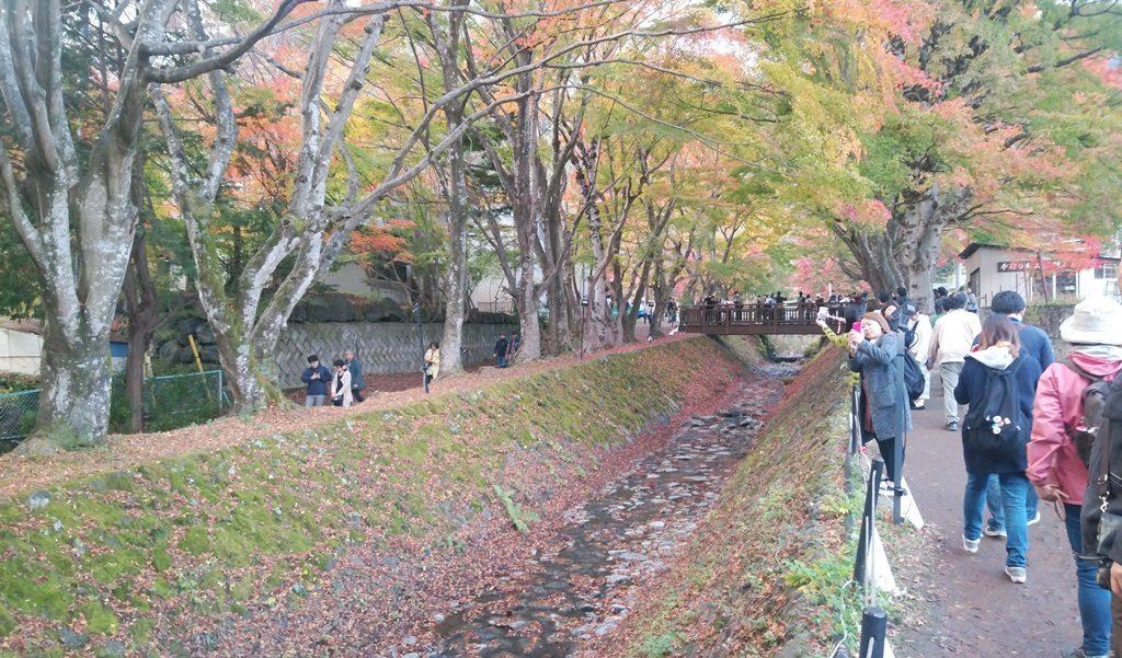 もみじ回廊4