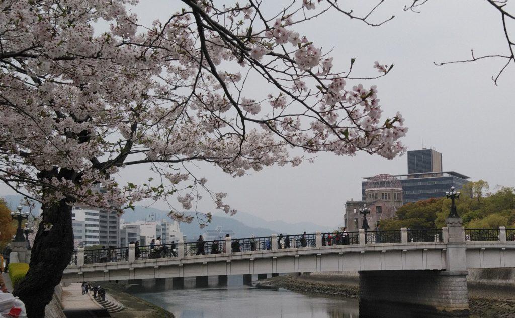 桜と原爆ドーム2